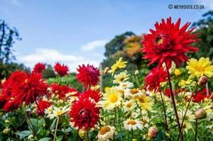 Flower-(D)-MOD